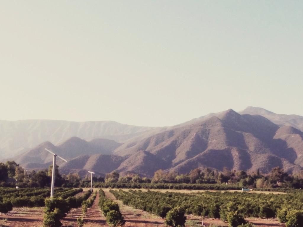 Ojai Orange fields