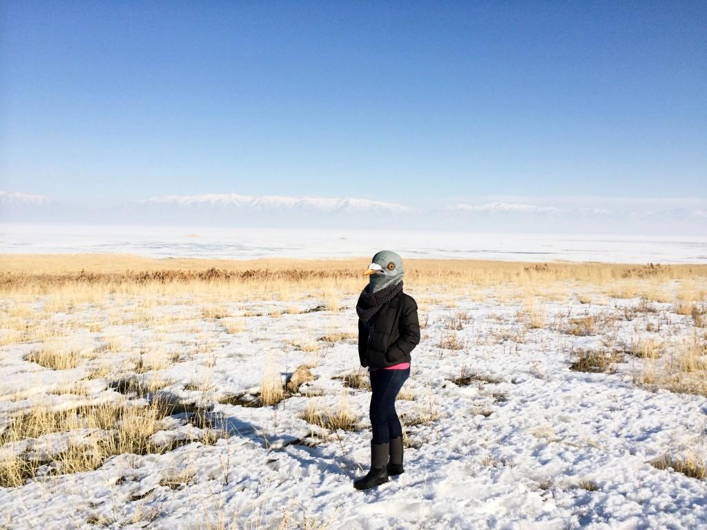Antelope Island Utah