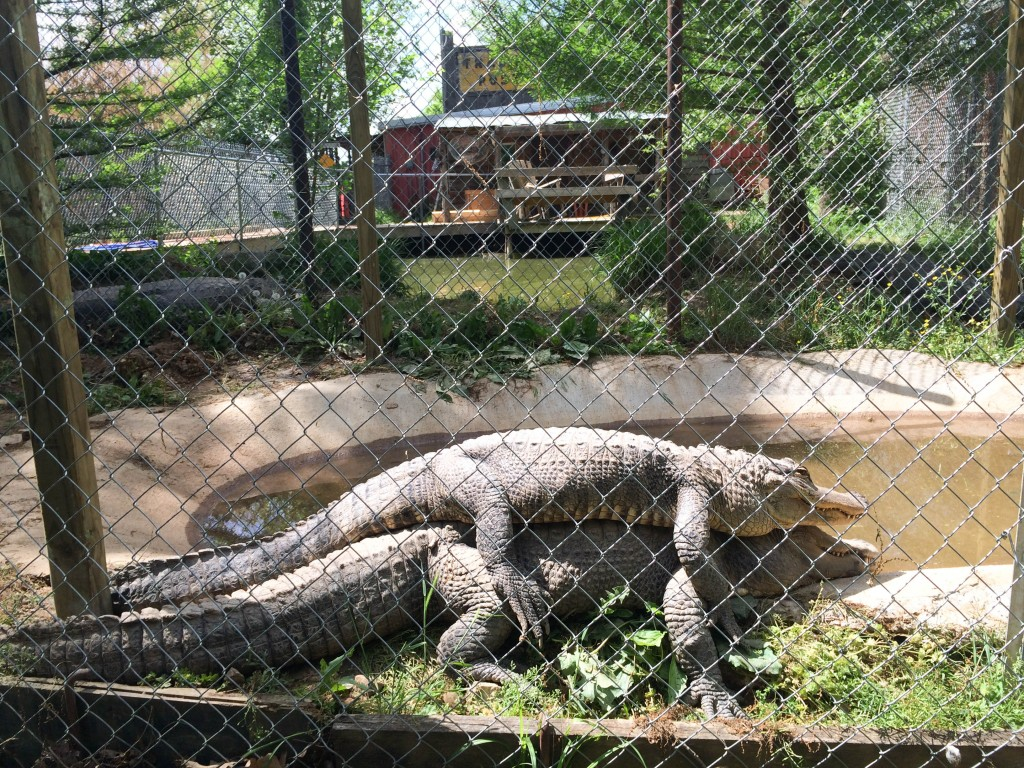 St Louis Lebanon Route 66 Riverside Wildlife Center