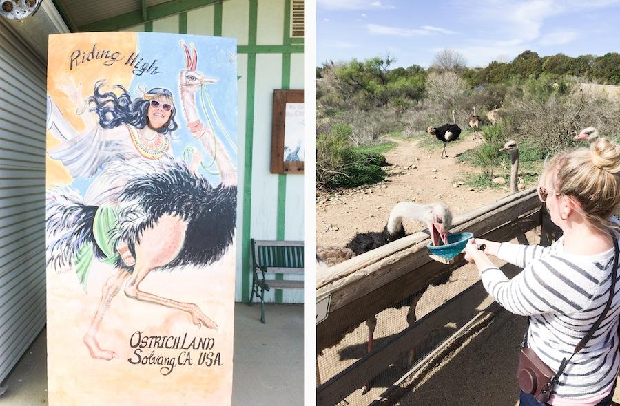 Santa Ynez Solvang Guide - Legal Miss Sunshine