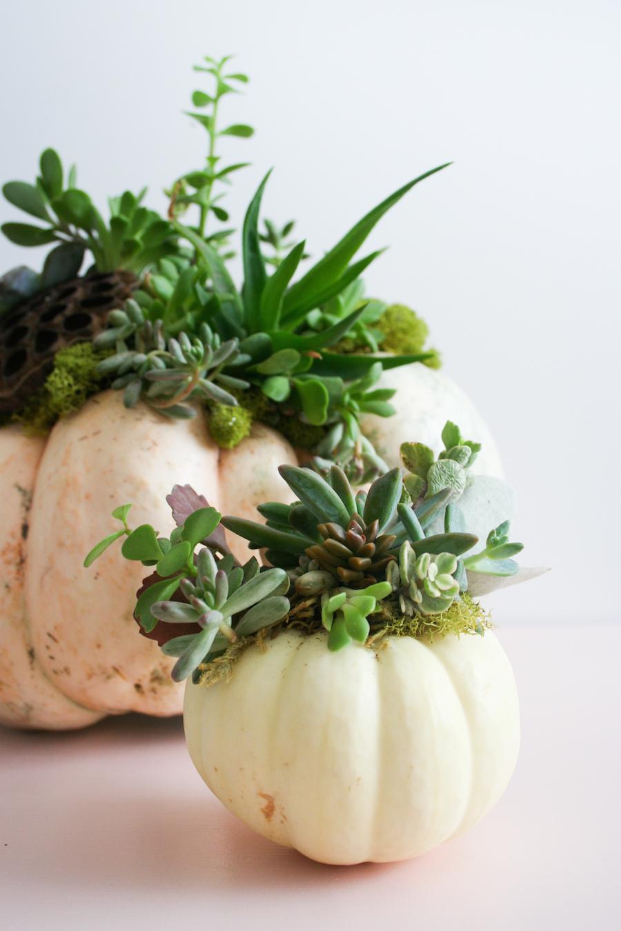 DIY Succulent Pumpkin // Legal Miss Sunshine