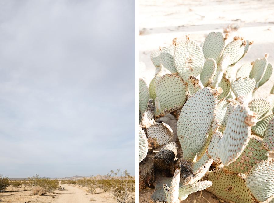 Dome in the Desert // Joshua Tree