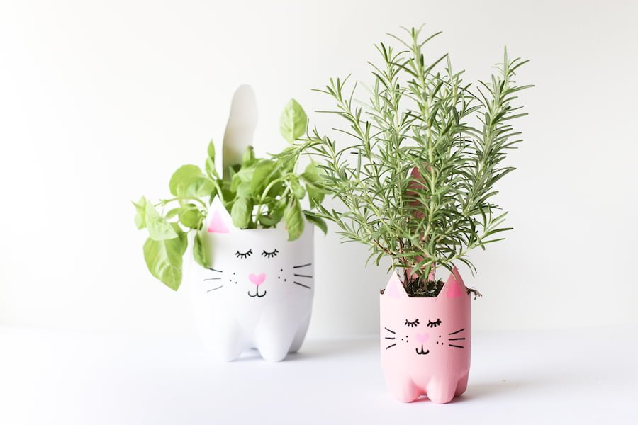 Turn an empty soda bottle into an adorable kitty plant planter for catnip,  herbs,