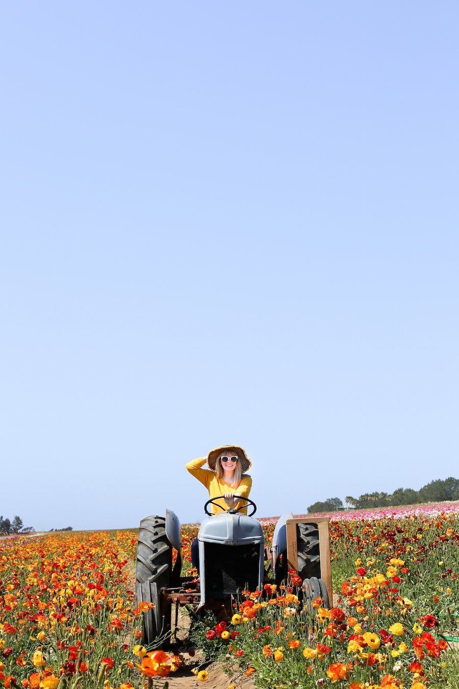 Visit The Flower Fields in Carlsbad, CA about 1-2 hours south of Los Angeles // saltycanary.com