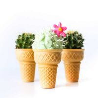 Cactus Ice Cream | Salty Canary