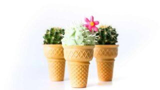 Cactus Ice Cream   Salty Canary