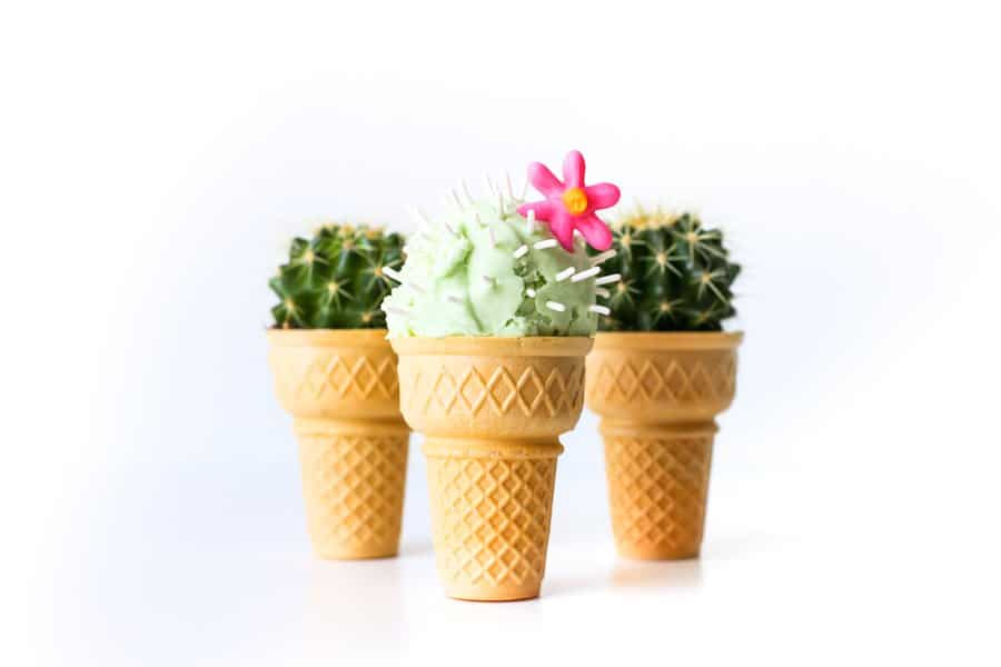 Cactus Ice Cream | Salty Canary