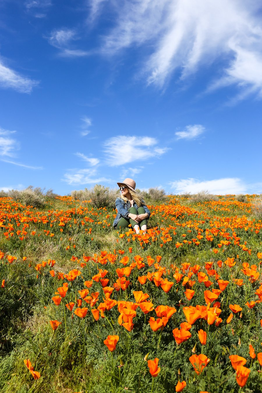 The ultimate southern california spring flower fields guide the ultimate southern california spring flower fields guide salty canary mightylinksfo