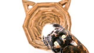 DIY Cardboard Cat Scratcher // Salty Canary
