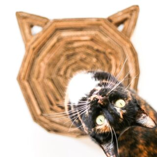 DIY Cardboard Cat Scratcher // Salty Canary