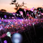 How to Experience the Magical Field of Light Art Installation